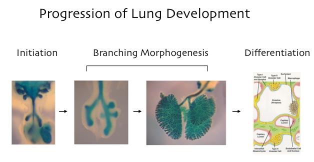 Lung_Progression